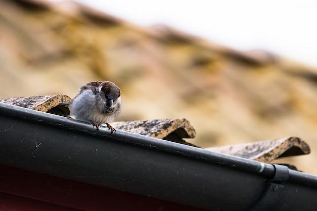 Mus zittend op het dak van een huis