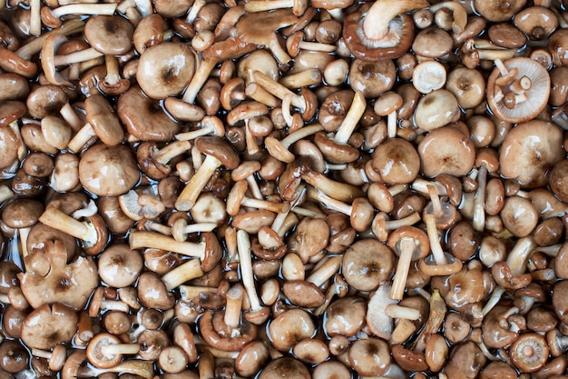 Mushrooms series: honey fungus