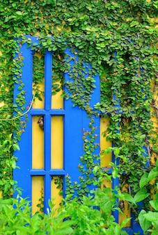 Muur en raam van een huis bedekt met klimop