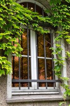 Muur met een raam van het gebouw met klimgroen in de wijk friedrichshain in berlijn, duitsland