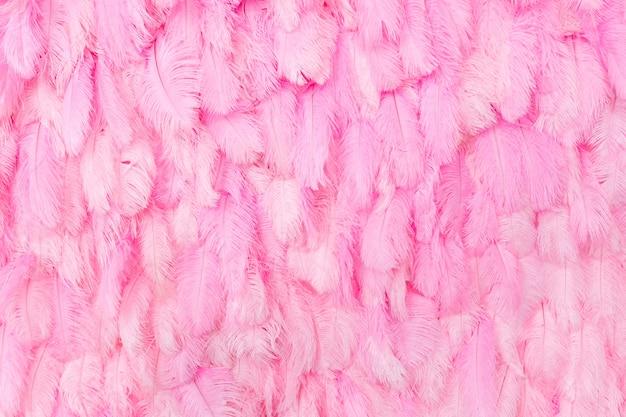 Muur met mooie roze veren