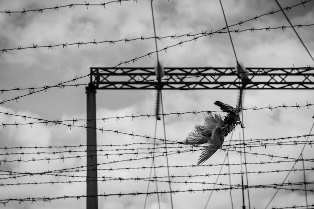 Muur met prikkeldraad en dode vogel - zwart-wit foto.