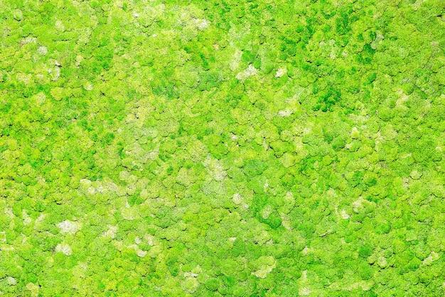 Muur mos textuur
