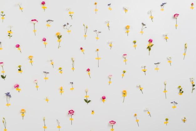 Muur van bloemen die de lentetijd aankondigt