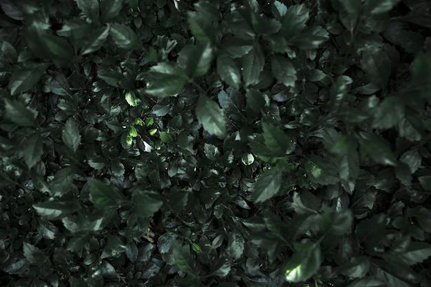 Muur van mooie donkere planten