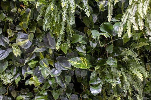 Muur van planten, verticale tuin, stedelijke jungle, moderne interieurdecoratie.