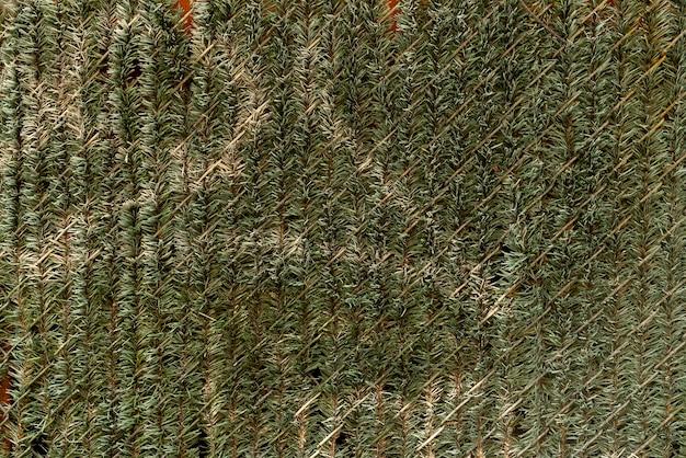 Muur versierd met pijnboombladeren
