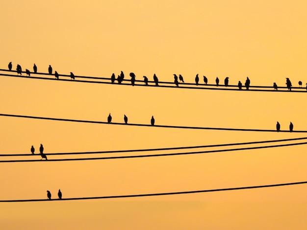 Mynasvogels die op draden en zonsonderganghemel zitten