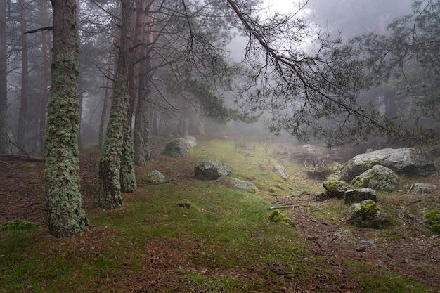 Mysterieus betoverd boslandschap, open plek in het bos met licht dat uit de lucht komt. morcuera madrid.