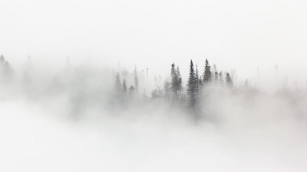 Mysterieus landschap van winterbos omringd door ochtendmist
