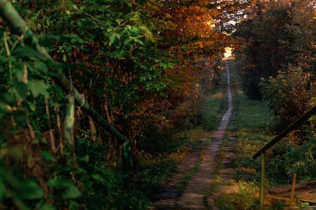 Mysterieus pad omgeven door felgroene oerwouden