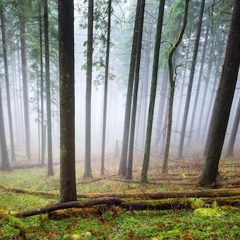 Mysterieuze mist in het groene bos met pijnbomen