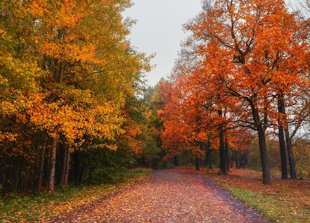 Mystiek de herfstlandschap met ochtendmist en weg in het park.