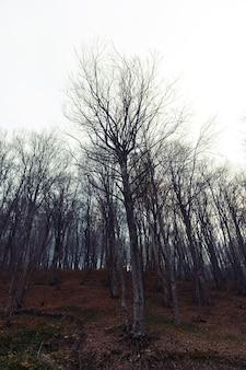 Mystiek herfstbos in de mist