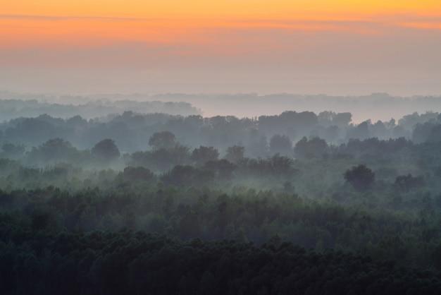 Mystiek uitzicht vanaf de top op bos onder nevel in de vroege ochtend. mist tussen de lagen van boomsilhouetten in taiga onder warme predawnhemel. ochtend sfeervol minimalistisch landschap van majestueuze natuur.