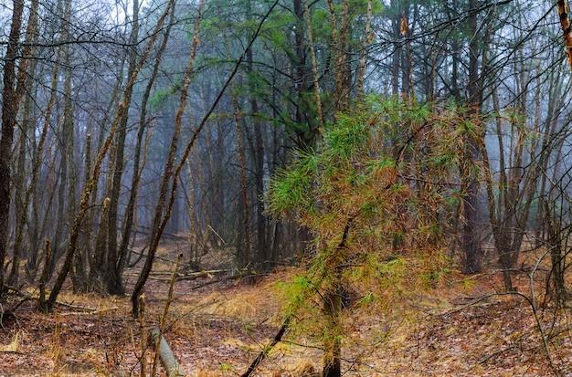 Mystieke bosmistweg door een bos met zwarte bomen en mist