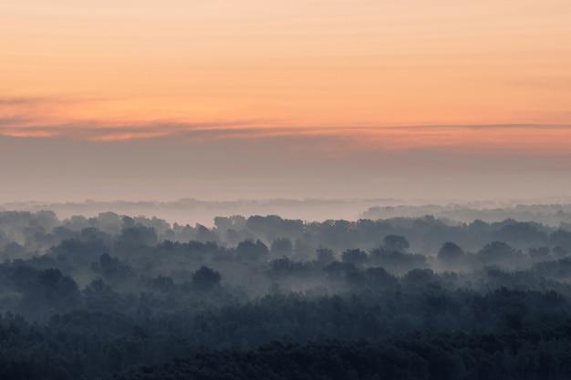 Mystieke kijk op bos onder nevel in de vroege ochtend.