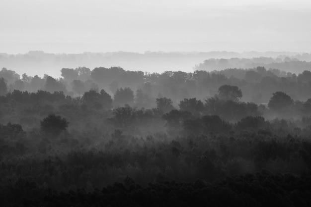 Mystieke kijk op bos onder waas in de vroege ochtend. griezelige mist tussen lagen van boomsilhouetten in taiga in zwart-wit. rustig sfeervol minimalistisch monochroom landschap van majestueuze aard.