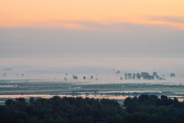 Mystieke mening over bos onder nevel bij vroege ochtend