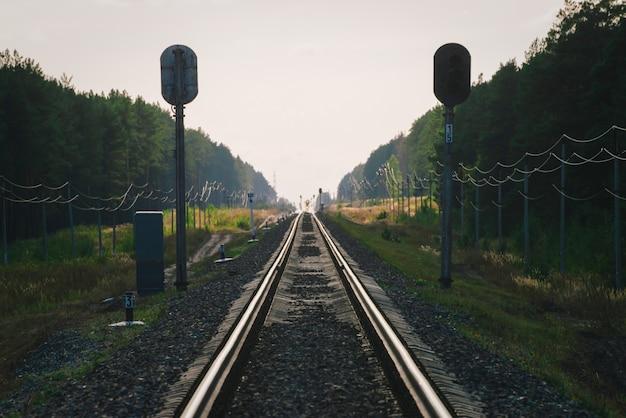 Mystieke trein reist per spoor langs het bos.