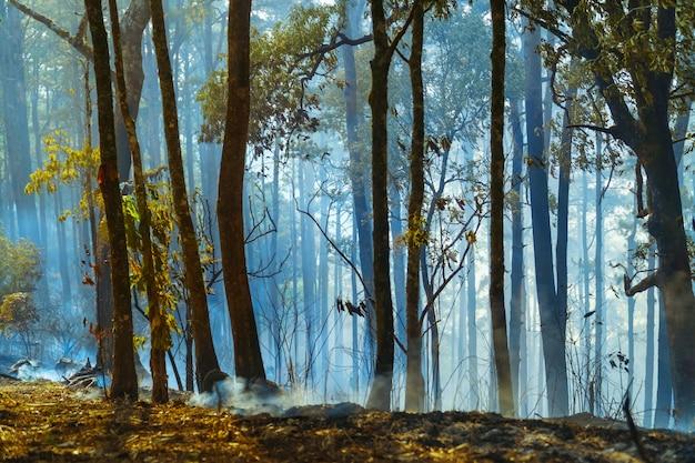 Na een regenwoudbrand is er een ramp verbrand door mensen
