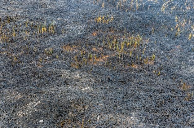 Na een wild vuur. donker grasveld.