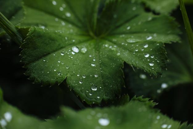 Na regen waterdruppels op groene bladeren in de tuin patroon achtergrond, sprankeling van druppels op oppervlak blad, kleur donker plat leggen natuurlijke achtergrond voor invoertekst.