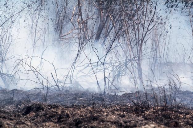 Na verwoest door brandend tropisch bos, thailand,