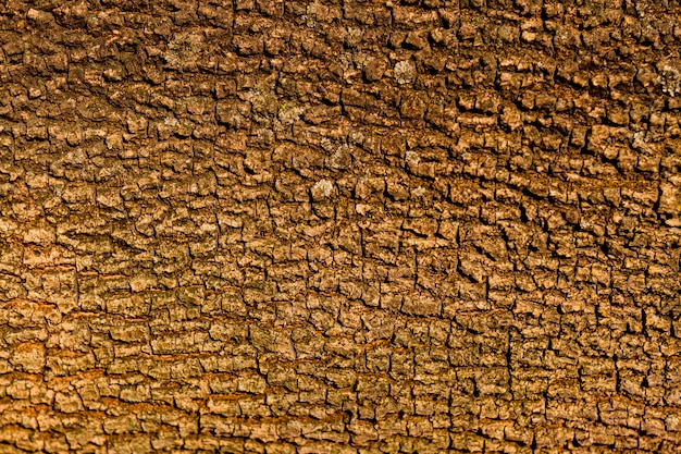 Naadloos de textuurontwerp van de boomschors
