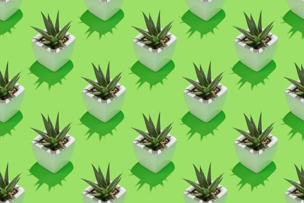 Naadloos herhalend patroon met succulente installatie in witte pot op groene achtergrond.
