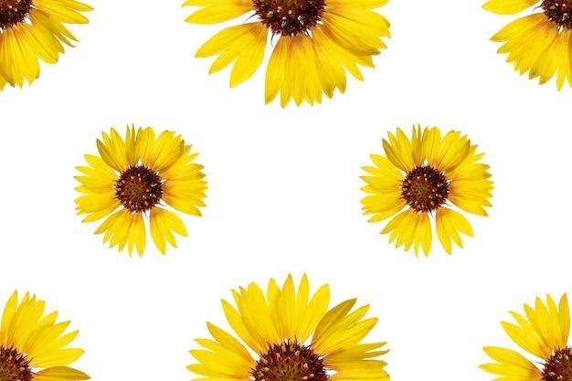 Naadloze bloemmotief van rudbeckia bloemen. witte geïsoleerde achtergrond. detailopname. macro-opnamen. concept voor printen en ontwerpen.