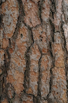 Naadloze boomschors textuur. eindeloze houten achtergrond voor het vullen van webpagina's of grafisch ontwerp. eiken of esdoorn