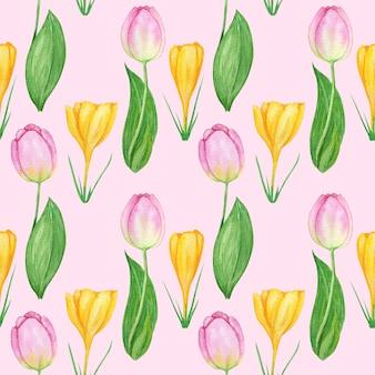 Naadloze patroon met krokus en tulp lentebloemen. tulpen aquarel afbeelding achtergrond