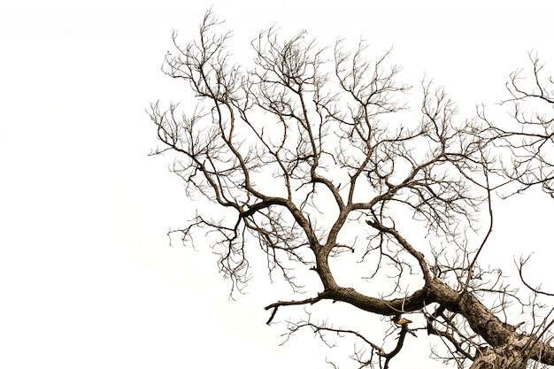 Naakte boomtakken geïsoleerd