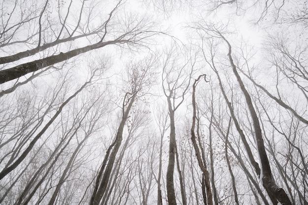 Naakte takken van bomen in het de winterbos