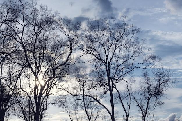 Naakte takken van de boom, afgezwakt kleur. abstracte achtergrond.