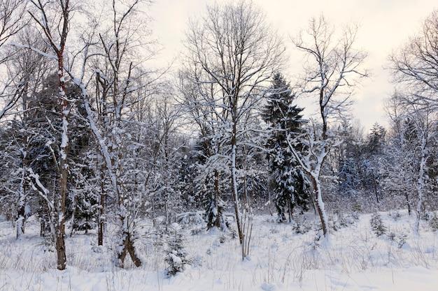 Naald- en loofbomen zonder blad in de winter, bomen bedekt met sneeuw na sneeuwval en sneeuwstormen