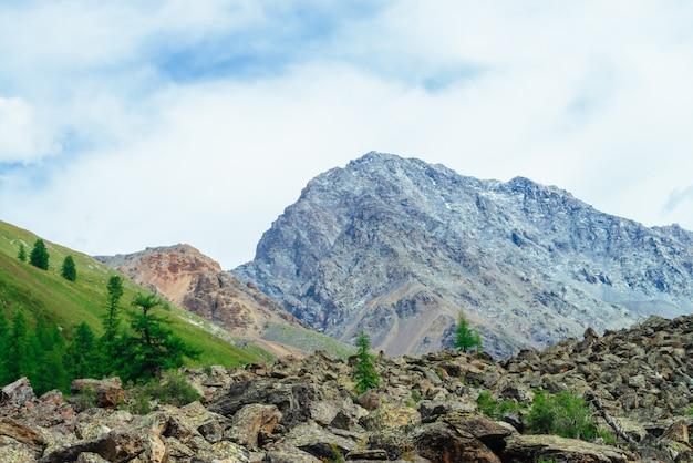 Naaldbomen in hooglanden. lariks bomen op steenachtige heuvel. prachtige gigantische rotsachtige bergen. bergketen. enorme rotsen. bergflora. conifer bos. verbazingwekkend levendig groen landschap van majestueuze natuur.