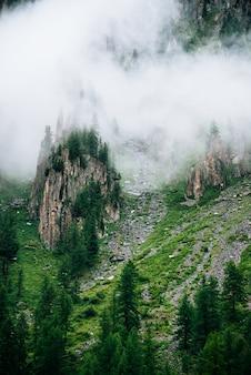 Naaldbomen op scherpe stenen van rotsachtige berg in dichte mist.