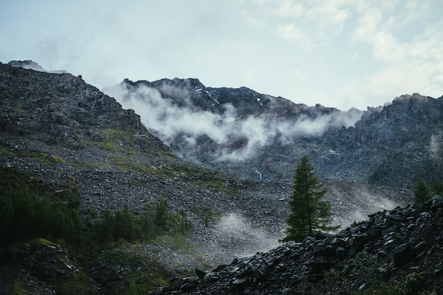 Naaldboom op achtergrond van hoge rotsachtige bergmuur met lage wolken. donker sfeervol landschap met lage wolken op scherpe rotsen. geweldig landschap met ruwe rotsen met wolk onder bewolkte hemel.