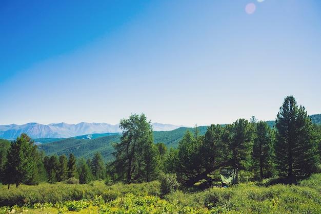 Naaldbos tegen heuvels met bosbedekking en reuzenbergen en gletsjers