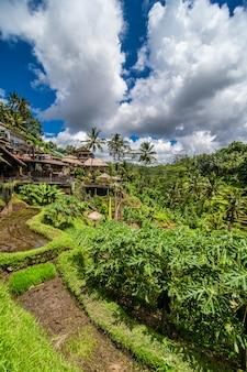Nabij het culturele dorp ubud ligt een gebied dat bekend staat als tegallalang en dat beschikt over de meest dramatische terrasvormige rijstvelden van heel bali.