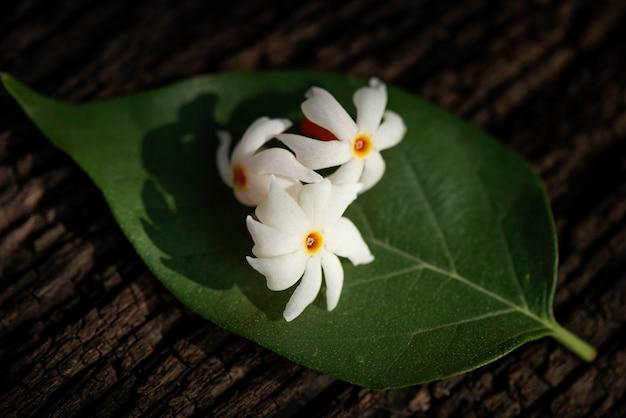 Nacht bloeiende jasmijnbloemen op oude houten en onscherpe aard