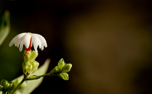 Nacht bloeiende jasmijnbloemen op wazig aard