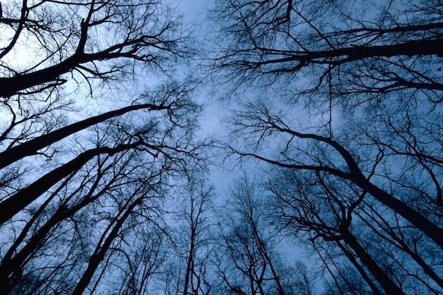 Nacht bosscène, hoogste mening van bomen tijdens donkere tijd