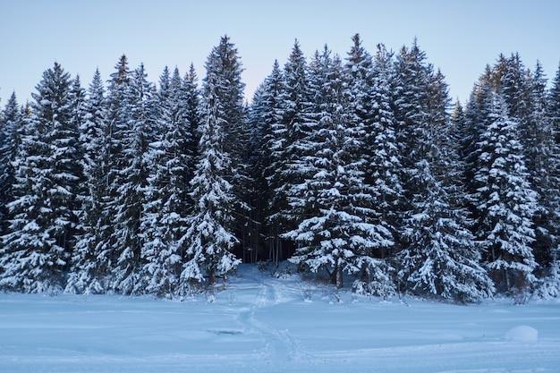 Nacht in donkere bosgang in hout vóór kerstmis