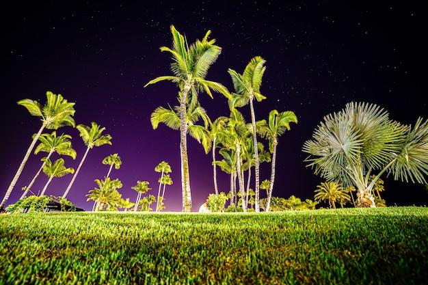 Nachtfoto van eiland met hoge palmbomen boven met sterren gevulde lucht en close-up van grond bedekt met groen gras. europa,