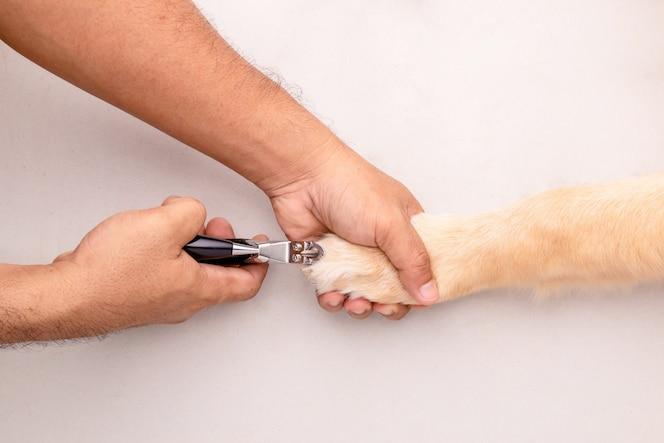 Nagel knippen voor honden. man met een nagelknipper voor dier om de nagel  van de hond te snijden. bovenaanzicht | Premium Foto