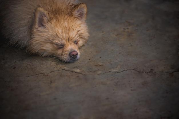 Nat en doorweek bruine hond neerleggen met de relaxstemming op de vuile cementen vloer