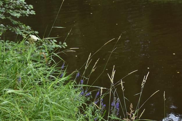Nat gras op de oever van de rivier